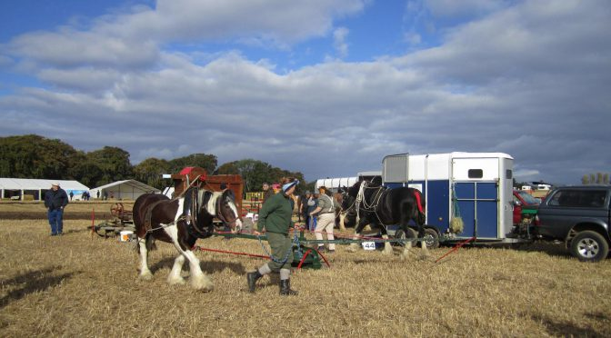 Threshing by horse power