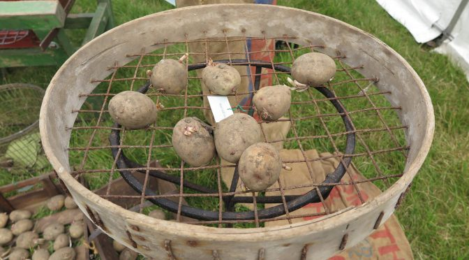 Dressing tatties the old-fashioned way