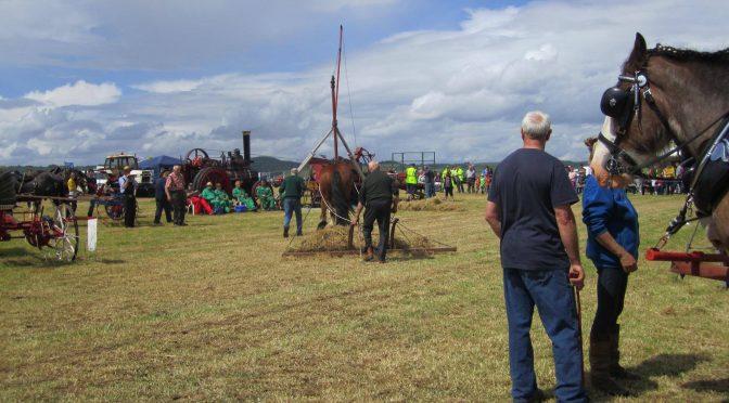 Tummlin' Tams or American hay rakes